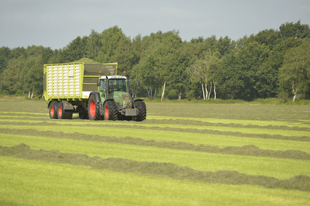tractor trailer: Agriculture, transport or cut grass with green grass and tractor trailer