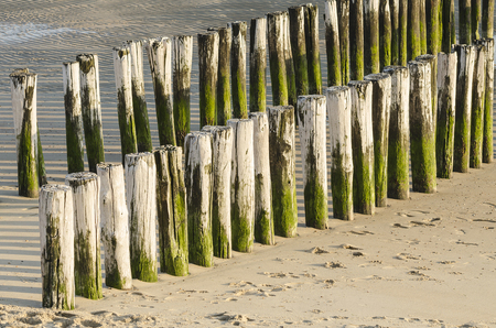 groynes: Two rows of white green groynes on a beach in New Zealand in the South of the Netherlands Stock Photo