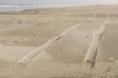 traces: Traces in the North Sea Beach of Terschelling