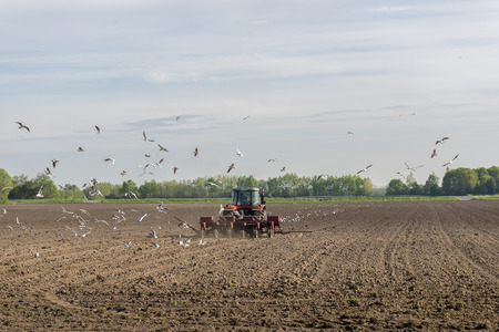 dozens: A red tractor plows the field Accompanied by dozens of seagulls Stock Photo
