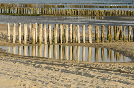 groynes: Rows of weathered wooden groynes on the beach of Zoutelande in Netherlands