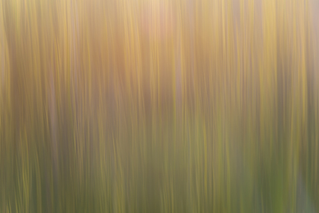 immaterial: Abstract background photo obtained by vertical movement parallel to the lines of the stems of the plants Stock Photo