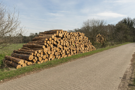Sawn trunks stacked on the side of the road with warning icons against ascend in the Netherlands