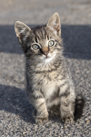 Young kitten on a farm looking curious at the camera