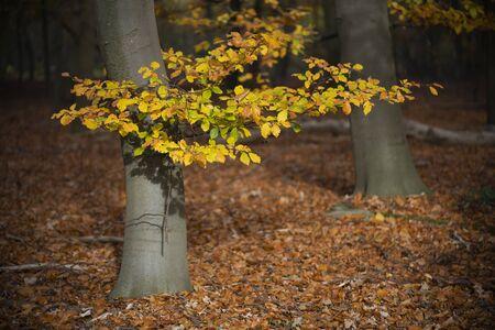 Sun rays in the autumn on colorful autumn leaves in a forest near Winterswijk in the Achterhoek in Netherlands Reklamní fotografie