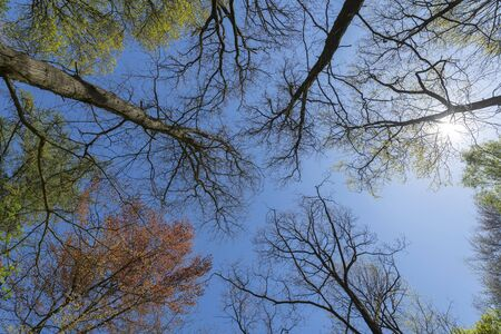 Forest trees in various colors with blue sky and sun in the spring