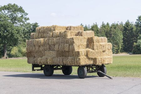 Old farm wagon with flat rectangular straw bales stacked in a livestock farming in the Netherlands. Reklamní fotografie