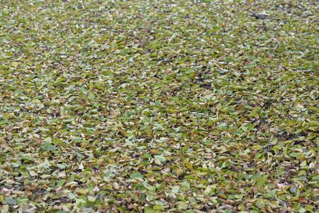 Fallen green leaves by extreme drought naturally in summer Reklamní fotografie