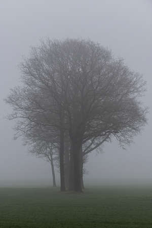 Tree contours in the fog in the winter in the Netherlands