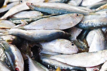 Fresh fish from sea market Stock Photo - 14265050