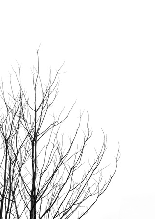 Leafless tree branches abstract background  Black and white  photo