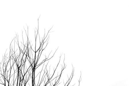 bomen zwart wit: Bladerloze boom takken abstracte achtergrond Zwart-wit