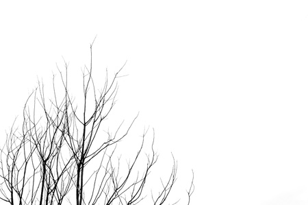 Leafless tree branches abstract background  Black and white