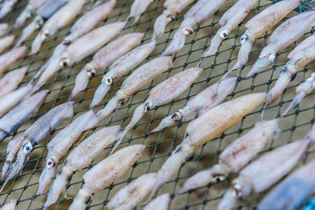 gridiron: Fresh squids on the gridiron, traditional squids drying in the sunlight. Stock Photo