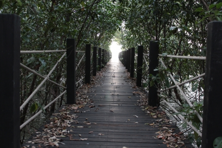 Walkway at mangrove forest