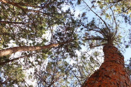 Tree and blue sky Worm eye view Stock Photo - 17404843