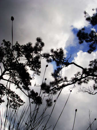Grass and Tree  in cloud Stock Photo - 17376561
