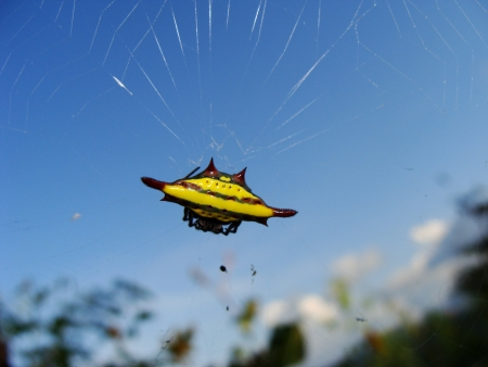 Yellow spider on his web  photo