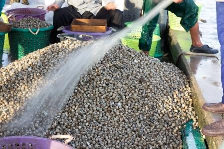 beachcombing: fisherman clean fresh cockles in fish market pier