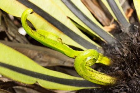 Frescas hojas verdes de un helecho