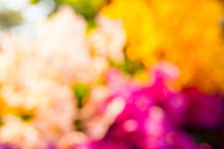 temporada de colorido borrosa fondo de la flor Foto de archivo