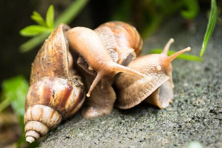 breeding ground: breeding of snail on the ground