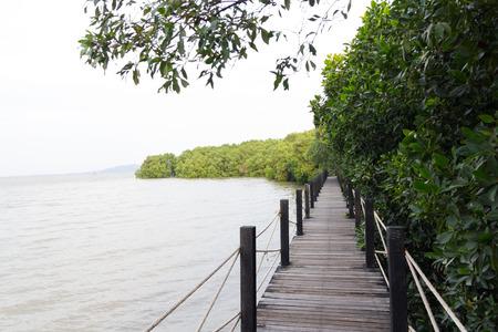 abundant: Wooden walkway and abundant mangrove forest
