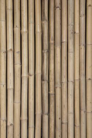 bamboo texture: dry yellow bamboo texture background