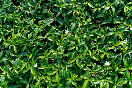 Green leaves pattern texture and background