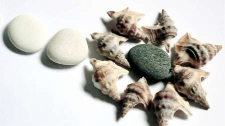 conchs and pebbles Stock Photo