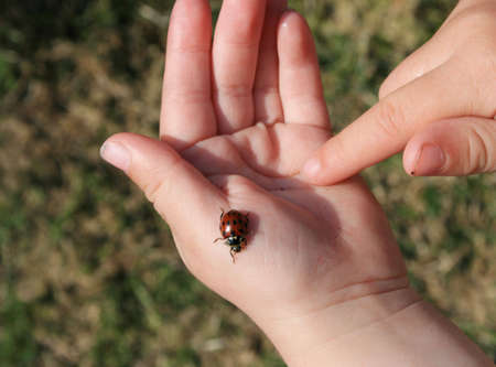 A child holding a tiny ladybird Stock Photo