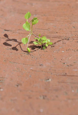 A tiny plant breaking through a brick