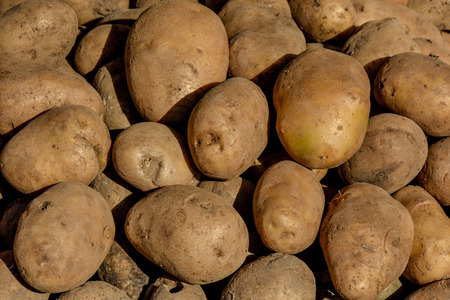contrasty: Potatoes under the contrasty sunlight photo Stock Photo