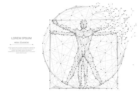 Szkieletowy model szkieletowy Proportion Man low poly