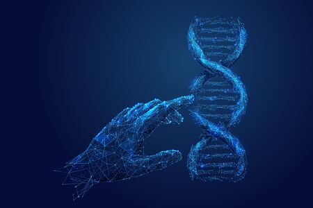 Genetic analysis and research low poly wireframe illustration. Polygonal DNA chromosome analyzing mesh art. 3D scientist hand touching double helix molecule model. Molecular biology science Illustration
