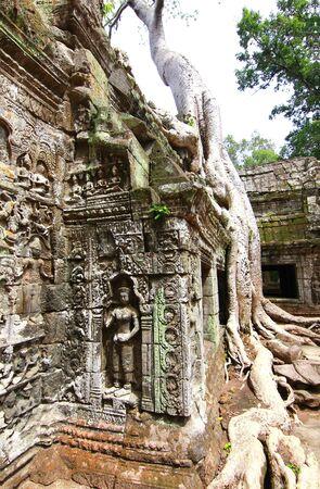 siem reap: Ta Prohm temple in Siem Reap Cambodia