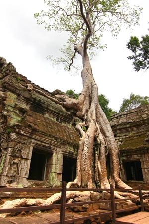 Ta Prohm temple in Siem Reap Cambodia