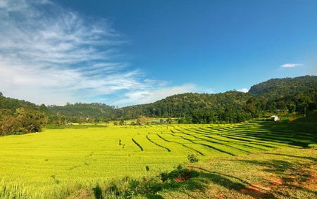 terraced field: Rice terraced field in chiangmai thailand Stock Photo