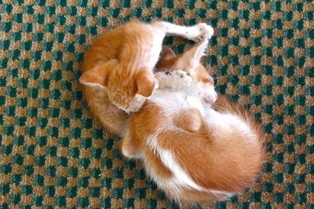 cute kittens: Two Cute Kittens sleeping in the street