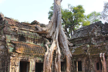 raider: Ta Prohm temple at Angkor, Siem Reap Province, Cambodia was used as a location in the film Tomb Raider Stock Photo