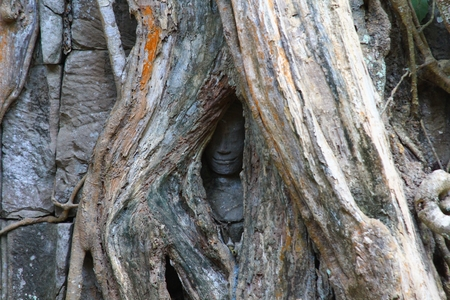 tonle sap: Ta Prohm temple at Angkor, Siem Reap Province, Cambodia was used as a location in the film Tomb Raider Stock Photo