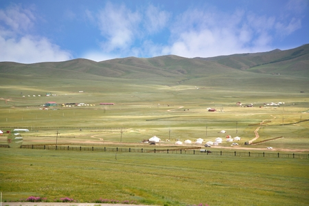 land turtle: The ger camp  in a large meadow at Ulaanbaatar , Mongolia