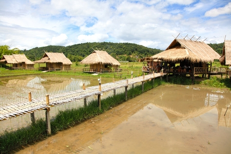 The house  and rice field in chiang dao city , chiangmai Thailand