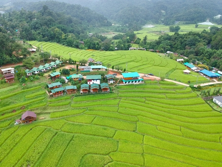 Rice terrace at Doi Inthanon National Park  Chom Thong District  Chiang Mai Province, Thailand in bird eye view