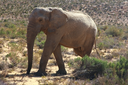 The elephant safari in cape town , south africa