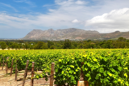 The Wine Farms in cape town , south africa