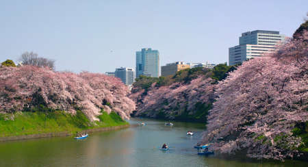 TOKYO JAPAN - MARCH 30 ,2015 : Chidorigafuchi is a moat located in the northwest of the Imperial Palace with flowers reflected in the water of the moat and a tunnel of cherry blossoms Editorial
