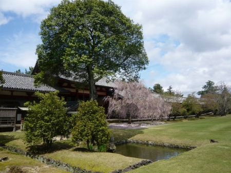 todaiji: Todaiji Temple, Nara