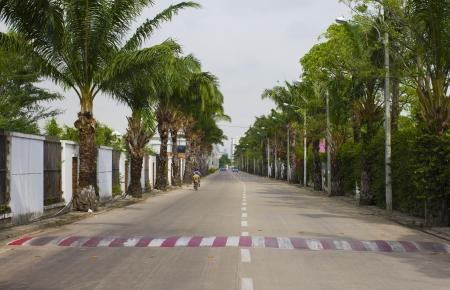 Perspective Street Tree photo