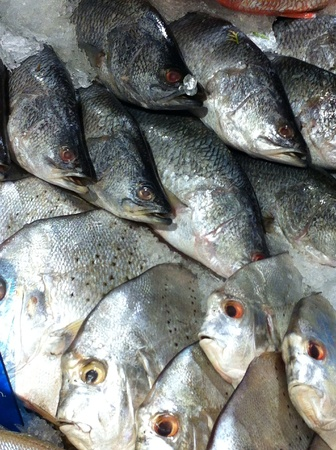 sea food: Fish sea food market